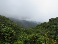 monteverde-cloud-forest